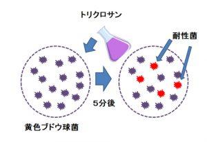 黄色ブドウ球菌にトリクロサンを加えると耐性菌が増える実験