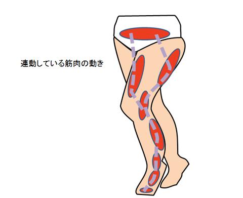 歩く時の筋肉の動き