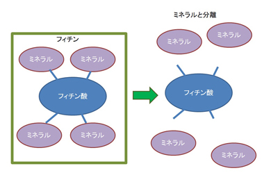 フィチンの構造