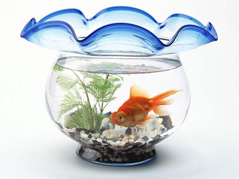 水草の入った金魚水槽