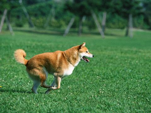 駆け回る犬