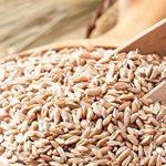 バーリーマックス(スーパー大麦)が便通とダイエットに効果がある理由