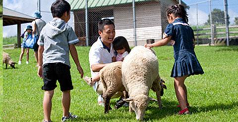 高千穂牧場で羊とふれあっている子供