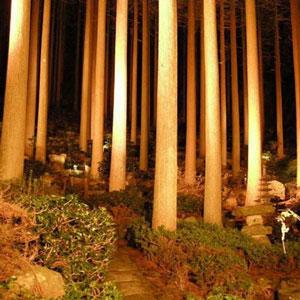 霧島ホテル百年杉庭園