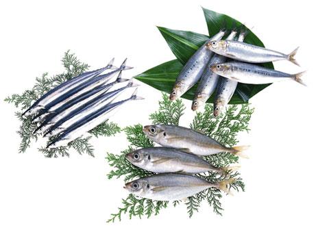 DHA、EPAを多く含む青魚