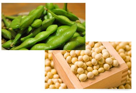 枝豆と大豆