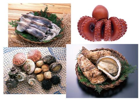イカ、タコ、牡蠣などの魚介類