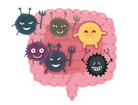 エクオール産生菌が全くいない人の腸内細菌