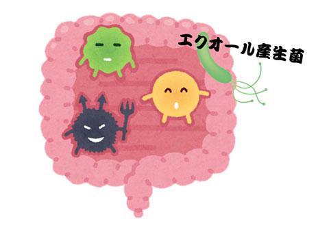 エクオール産生菌